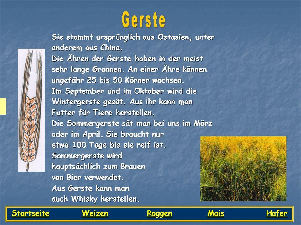 Startseite Weizen Roggen Mais Hafer
