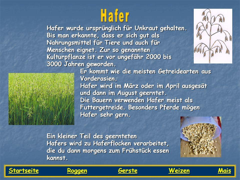 Startseite Roggen Gerste Weizen Mais