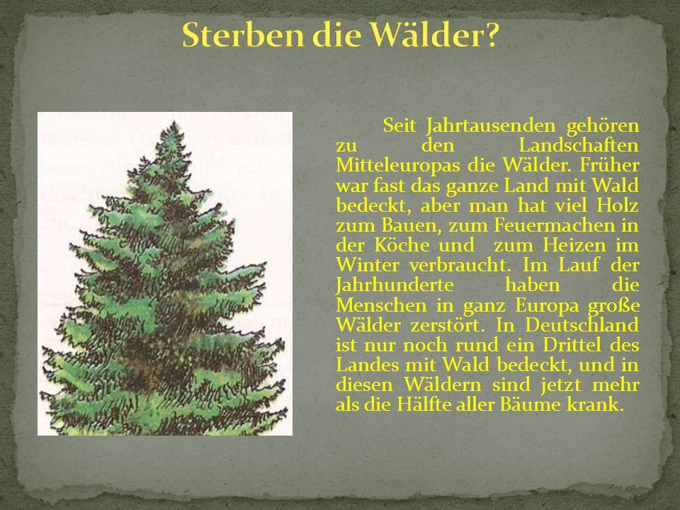 Seit Jahrtausenden gehören zu den Landschaften Mitteleuropas die Wälder.