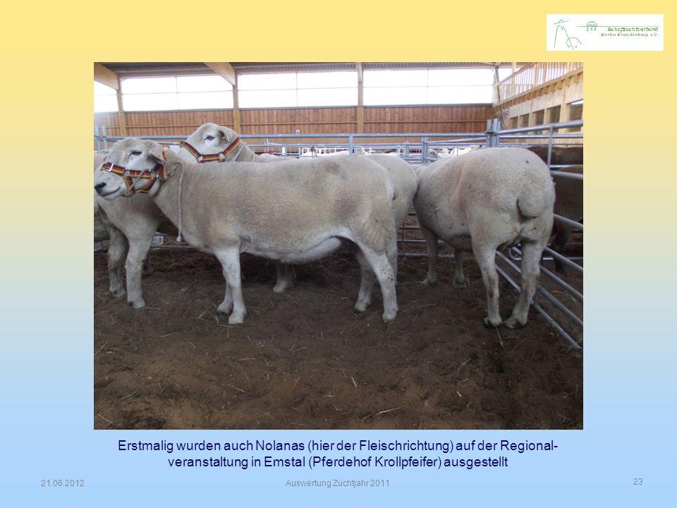 """"""" Erstmalig wurden auch Nolanas (hier der Fleischrichtung) auf der Regional-veranstaltung in Emstal (Pferdehof Krollpfeifer) ausgestellt."""