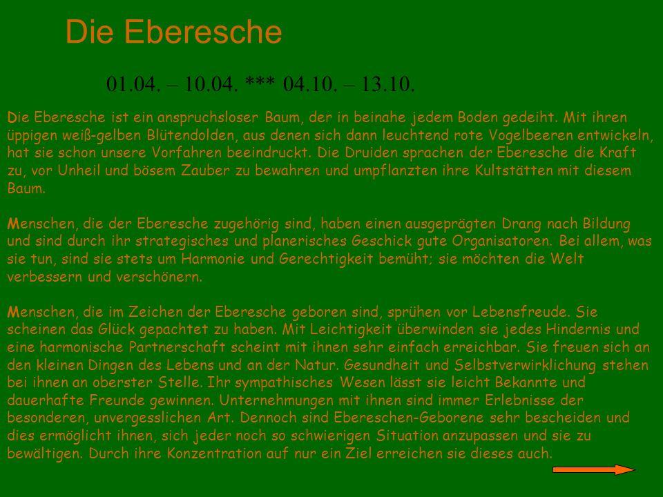 Die Eberesche 01.04. – 10.04. *** 04.10. – 13.10.