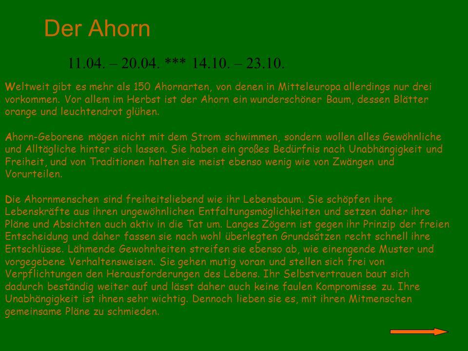 Der Ahorn 11.04. – 20.04. *** 14.10. – 23.10.