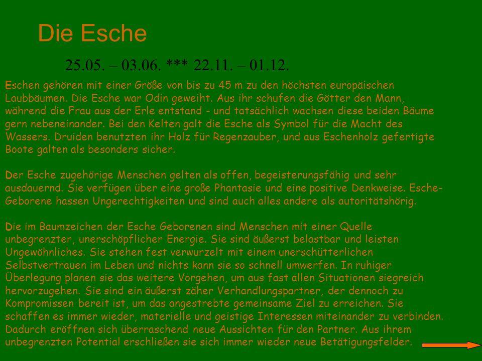 Die Esche 25.05. – 03.06. *** 22.11. – 01.12.
