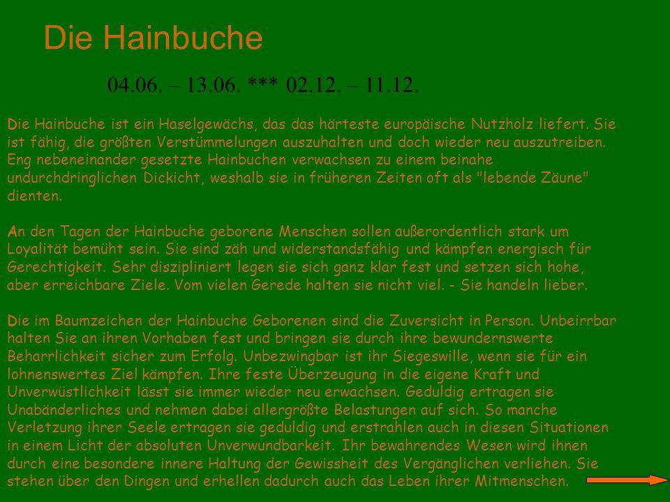 Die Hainbuche 04.06. – 13.06. *** 02.12. – 11.12.