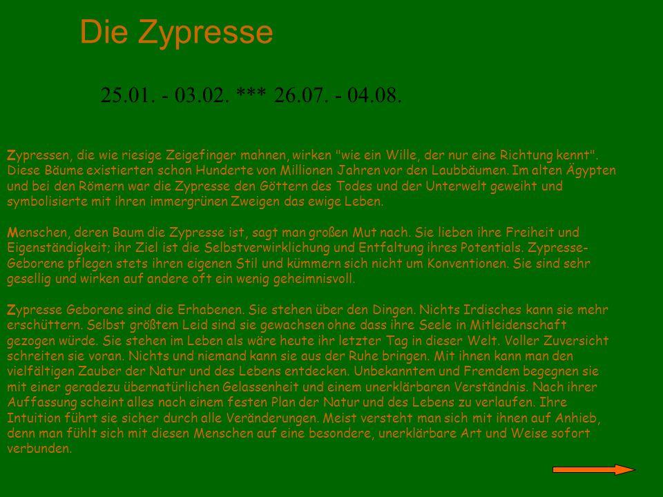 Die Zypresse 25.01. - 03.02. *** 26.07. - 04.08.