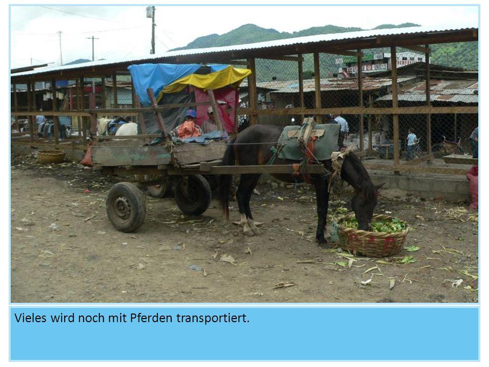 Vieles wird noch mit Pferden transportiert.