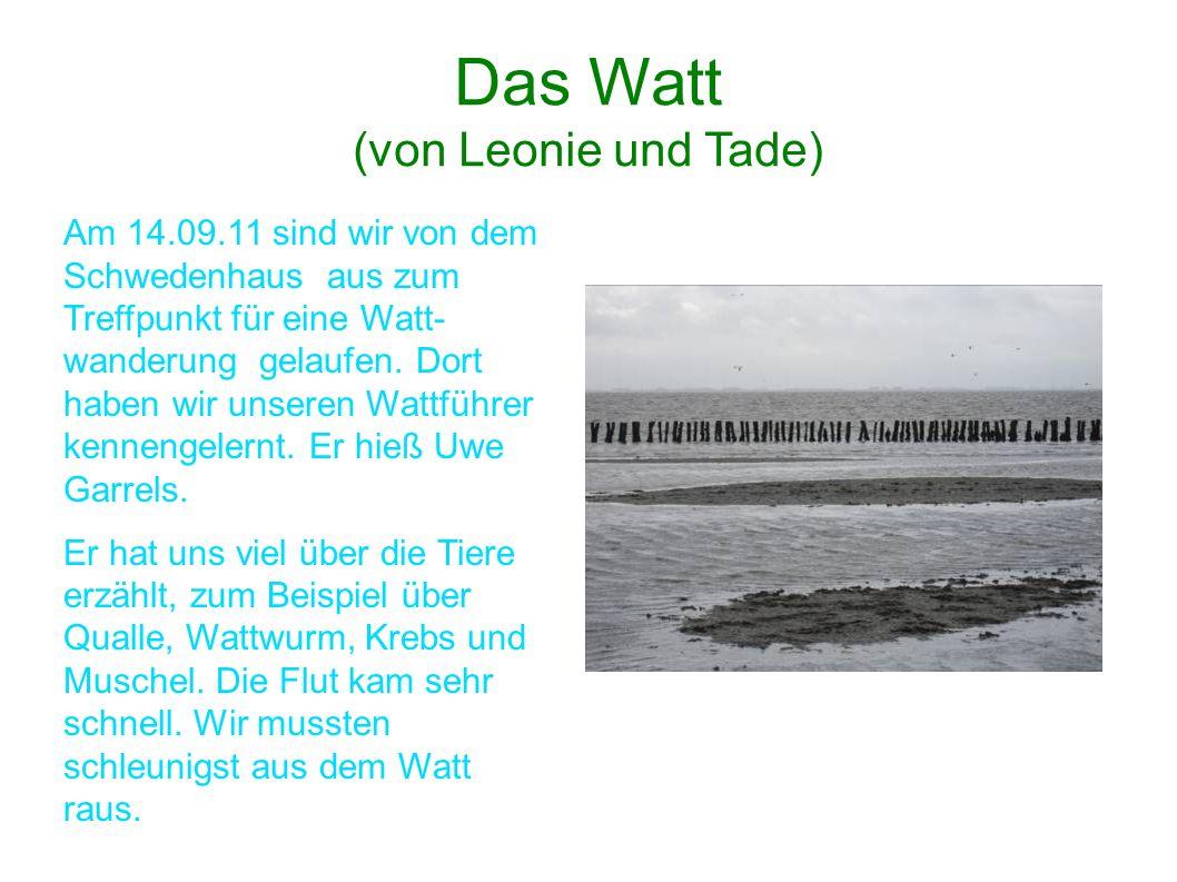 Das Watt (von Leonie und Tade)