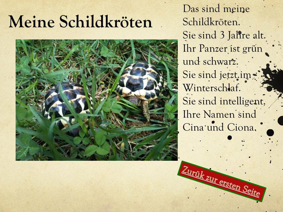 Meine Schildkröten Das sind meine Schildkröten. Sie sind 3 Jahre alt.