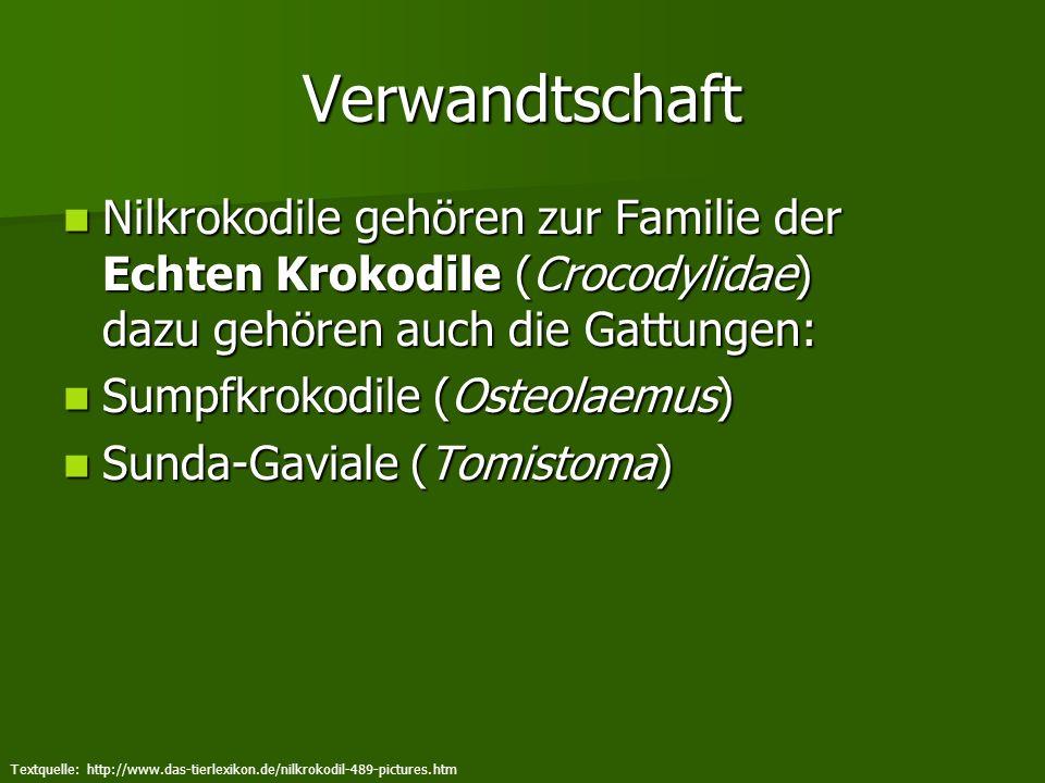 Verwandtschaft Nilkrokodile gehören zur Familie der Echten Krokodile (Crocodylidae) dazu gehören auch die Gattungen: