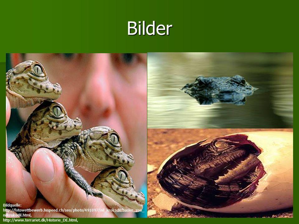 Bilder Bildquelle: http://fotowettbewerb.hispeed.ch/seo/photo/491097/nil_krokodil/basler_zoo_nilkrokodil.html,
