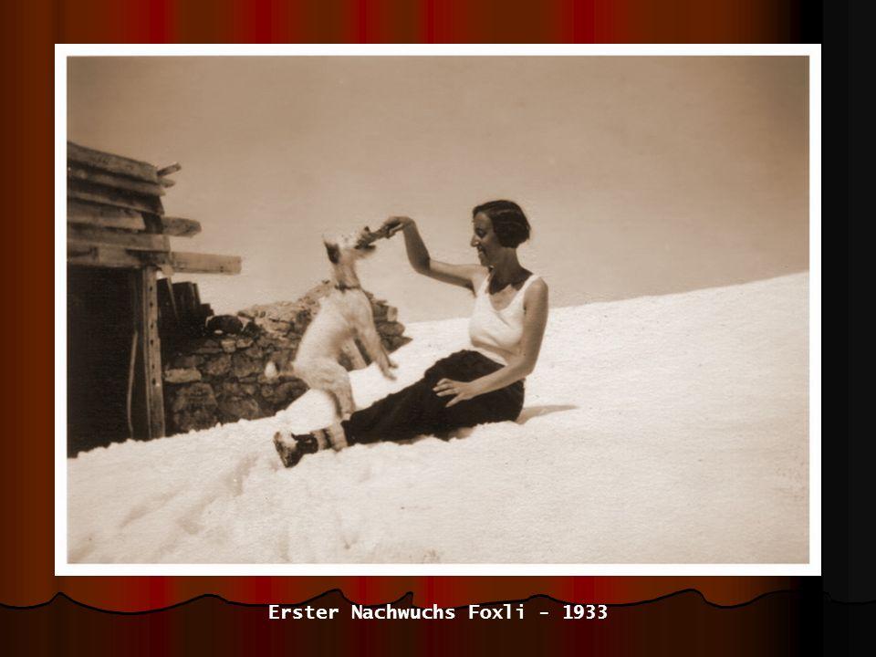 Erster Nachwuchs Foxli - 1933