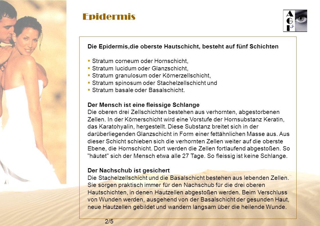 Epidermis Die Epidermis,die oberste Hautschicht, besteht auf fünf Schichten. Stratum corneum oder Hornschicht,