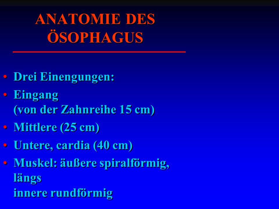 ANATOMIE DES ÖSOPHAGUS