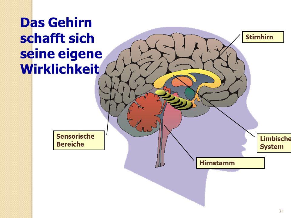Das Gehirn schafft sich seine eigene Wirklichkeit
