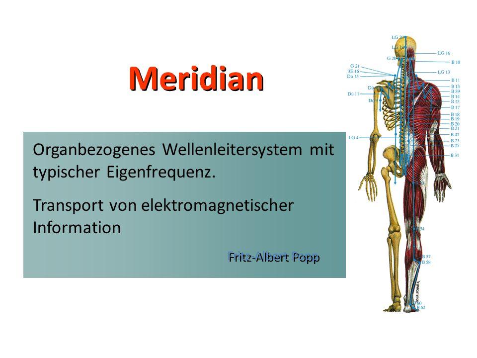 Meridian Fritz-Albert Popp. Organbezogenes Wellenleitersystem mit typischer Eigenfrequenz.