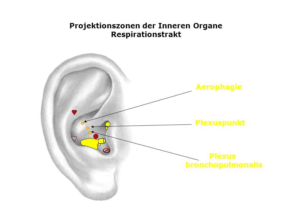Projektionszonen der Inneren Organe Respirationstrakt