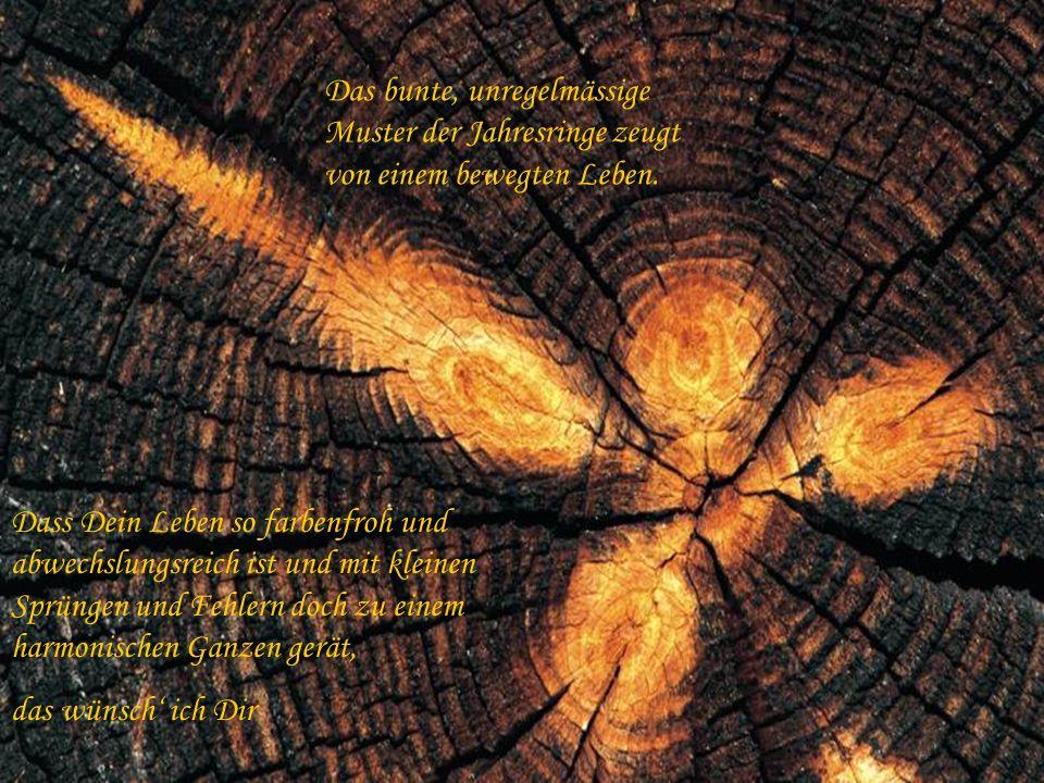 Das bunte, unregelmässige Muster der Jahresringe zeugt von einem bewegten Leben.