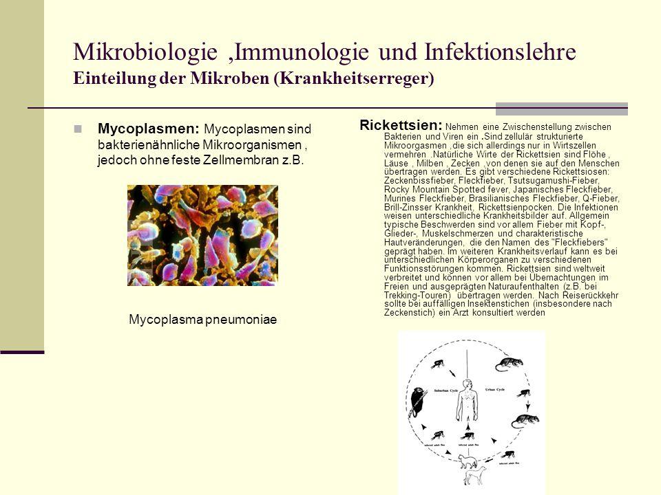 Mikrobiologie ,Immunologie und Infektionslehre Einteilung der Mikroben (Krankheitserreger)
