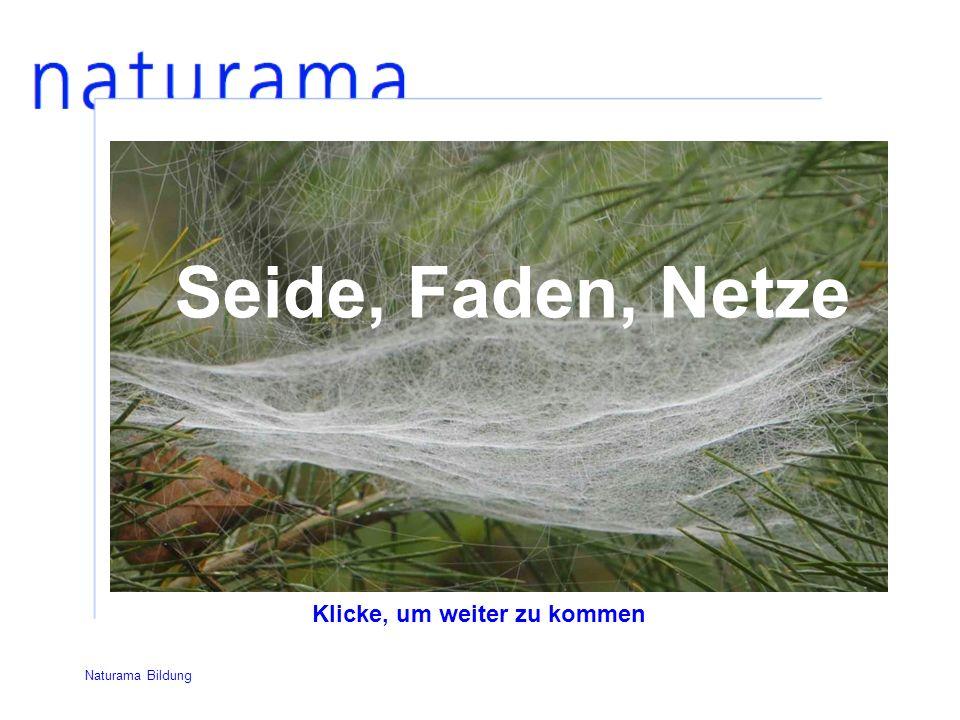 Seide, Faden, Netze Klicke, um weiter zu kommen Naturama Bildung