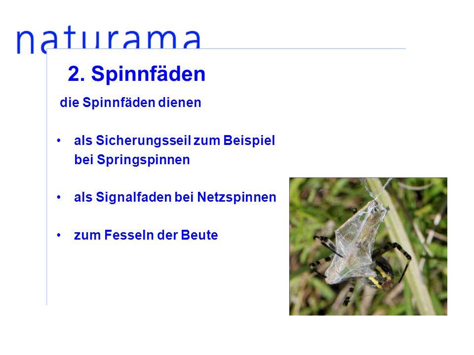 2. Spinnfäden die Spinnfäden dienen als Sicherungsseil zum Beispiel