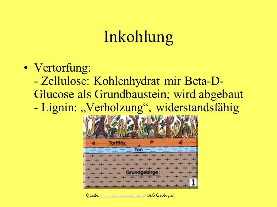 """Inkohlung Vertorfung: - Zellulose: Kohlenhydrat mir Beta-D-Glucose als Grundbaustein; wird abgebaut - Lignin: """"Verholzung , widerstandsfähig."""