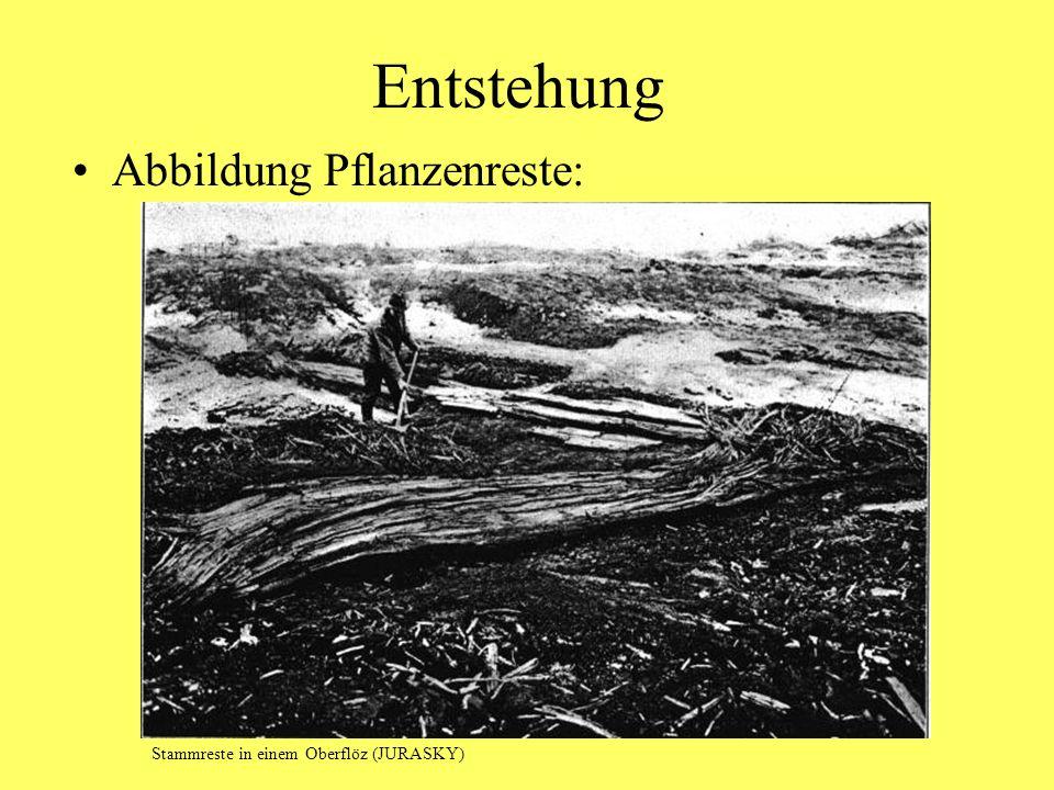 Entstehung Abbildung Pflanzenreste: