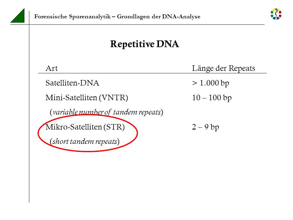 Repetitive DNA Art Länge der Repeats Satelliten-DNA > bp