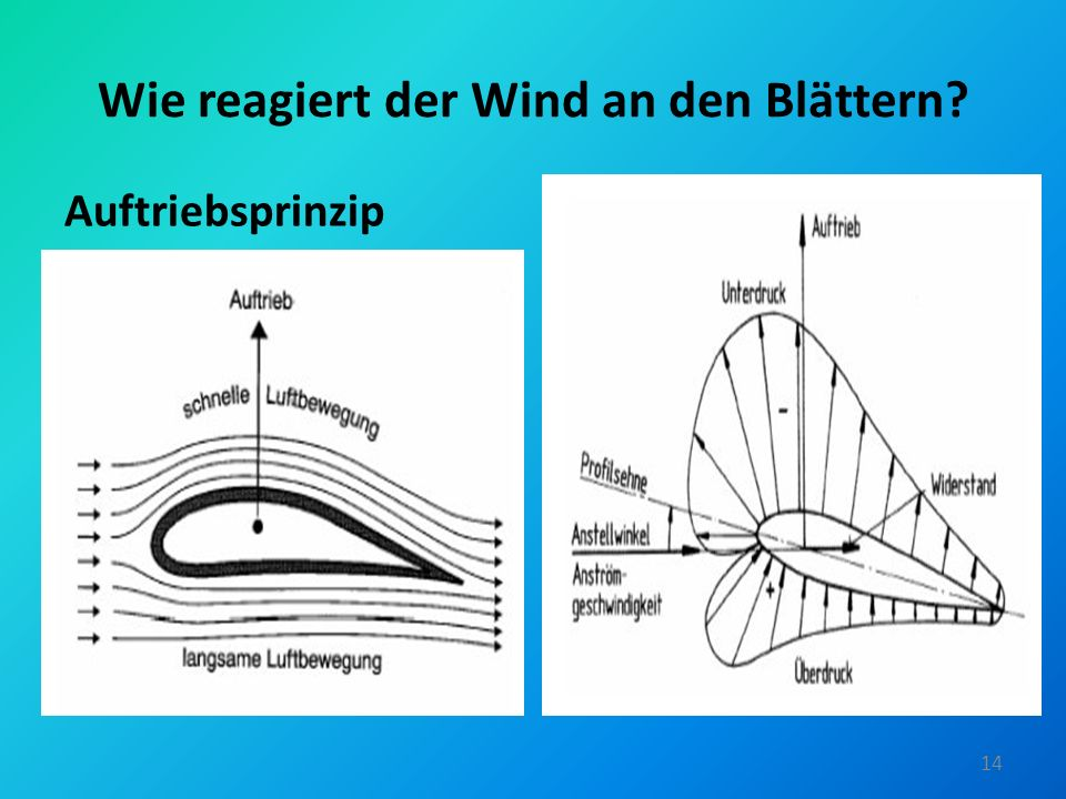 Wie reagiert der Wind an den Blättern