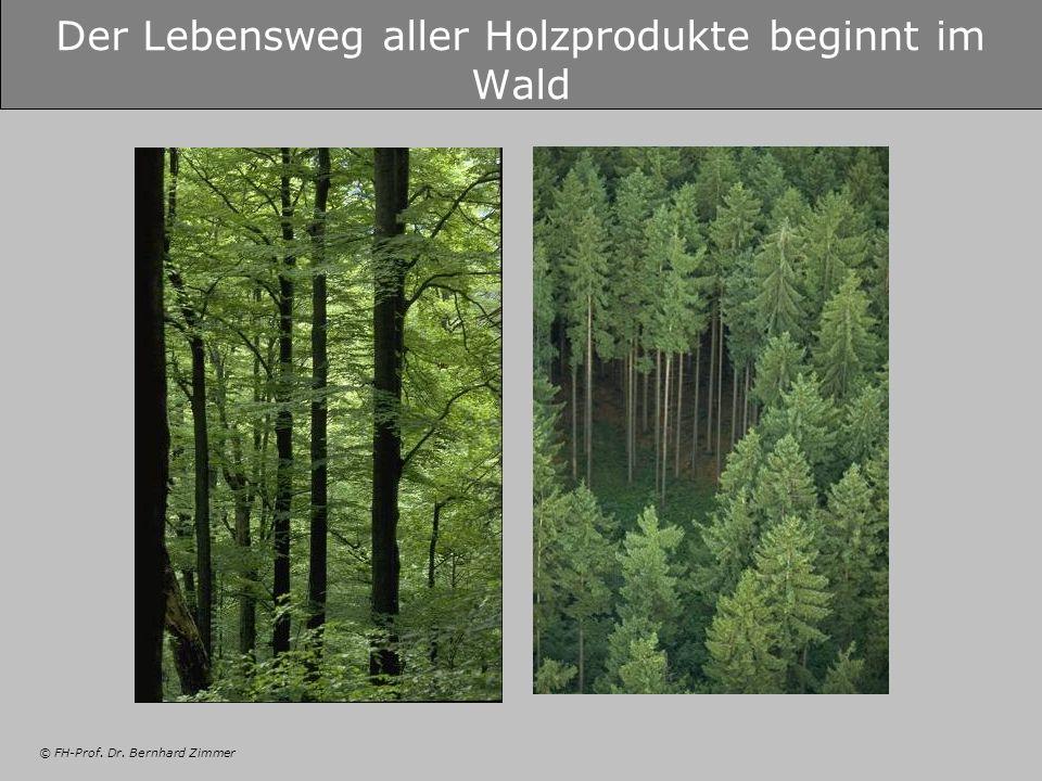 Der Lebensweg aller Holzprodukte beginnt im Wald