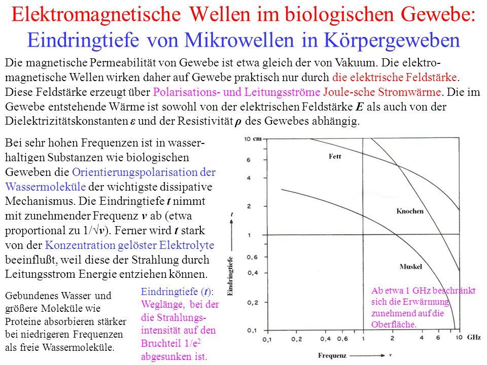 Elektromagnetische Wellen im biologischen Gewebe: Eindringtiefe von Mikrowellen in Körpergeweben