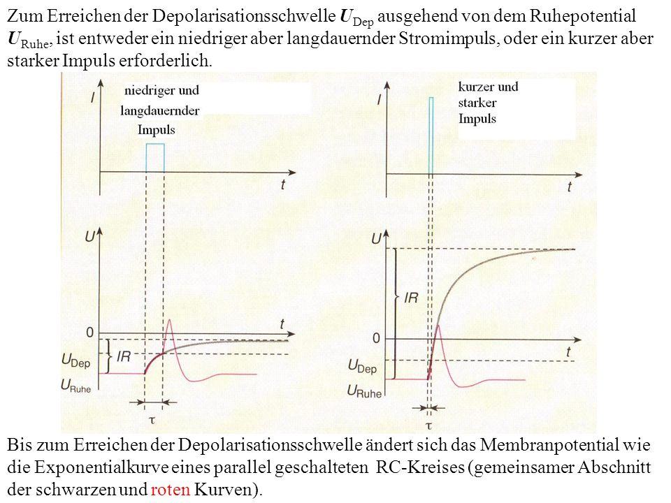 Zum Erreichen der Depolarisationsschwelle UDep ausgehend von dem Ruhepotential URuhe, ist entweder ein niedriger aber langdauernder Stromimpuls, oder ein kurzer aber starker Impuls erforderlich.