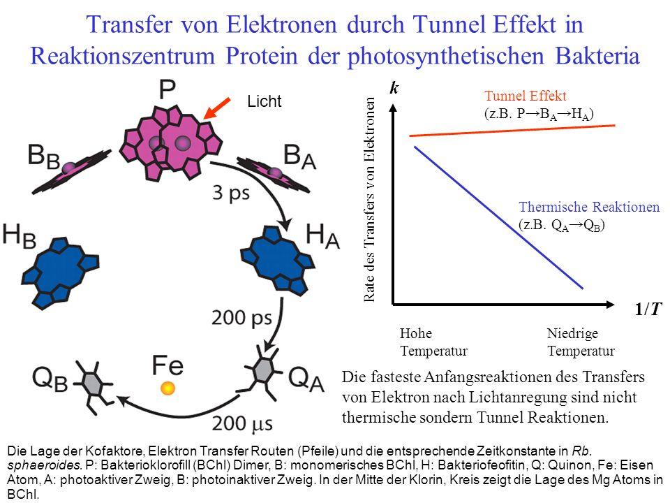 Transfer von Elektronen durch Tunnel Effekt in Reaktionszentrum Protein der photosynthetischen Bakteria