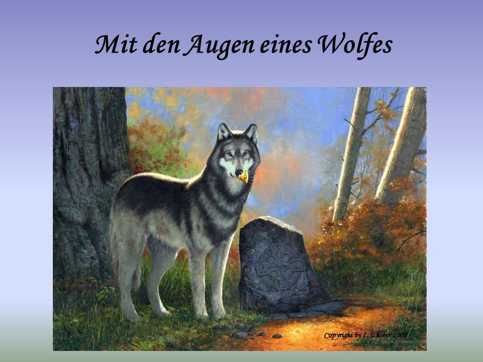 Mit den Augen eines Wolfes