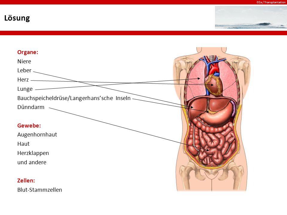 Lösung Organe: Niere Leber Herz Lunge