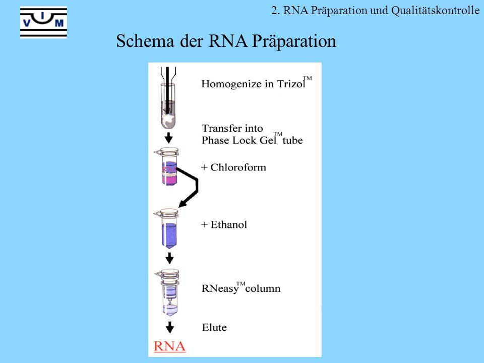 Schema der RNA Präparation