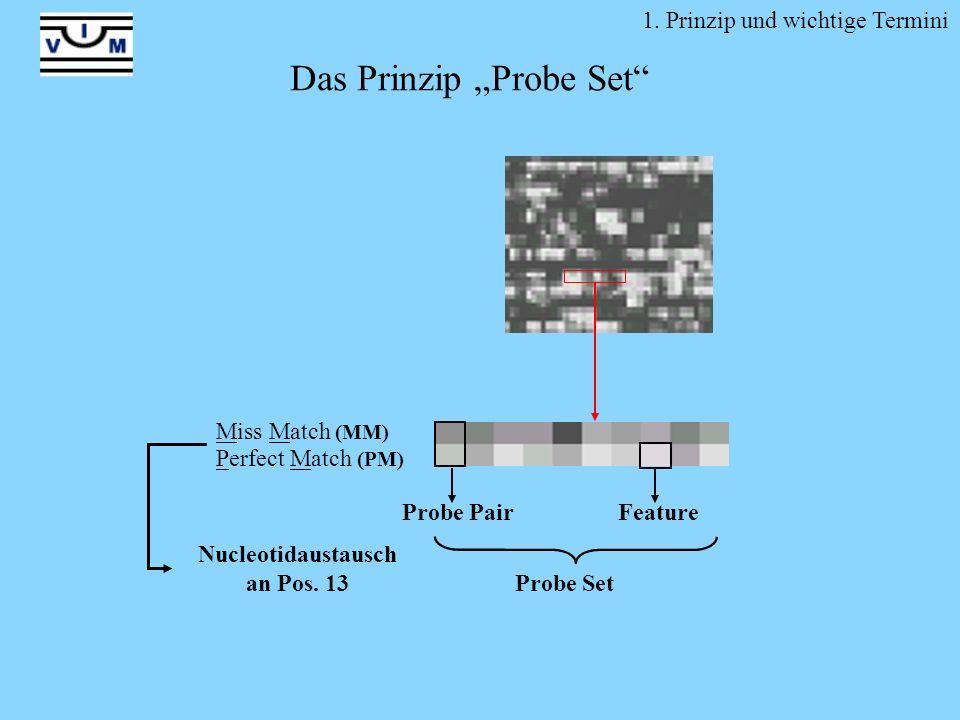 Nucleotidaustausch an Pos. 13