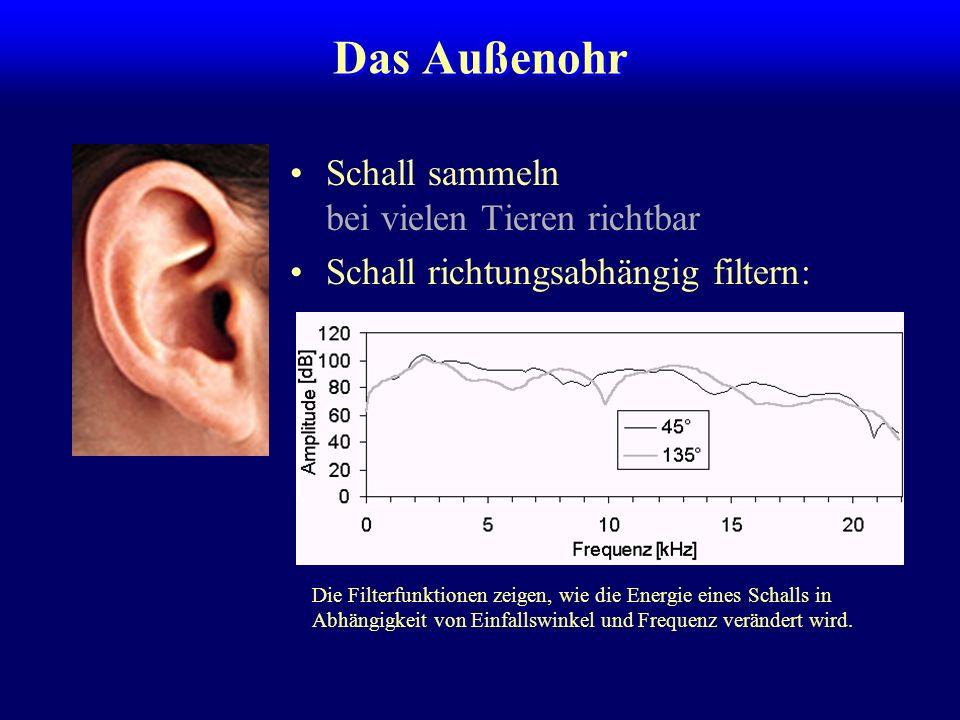Das Außenohr Schall sammeln bei vielen Tieren richtbar