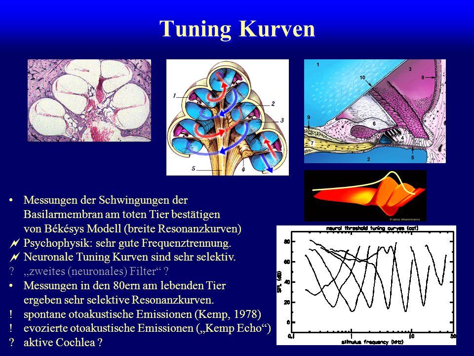 Tuning Kurven Messungen der Schwingungen der Basilarmembran am toten Tier bestätigen von Békésys Modell (breite Resonanzkurven)