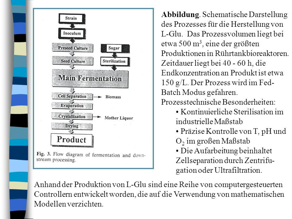Abbildung. Schematische Darstellung des Prozesses für die Herstellung von L-Glu. Das Prozessvolumen liegt bei etwa 500 m3, eine der größten Produktionen in Rührtankbioreaktoren. Zeitdauer liegt bei 40 - 60 h, die Endkonzentration an Produkt ist etwa 150 g/L. Der Prozess wird im Fed-Batch Modus gefahren.