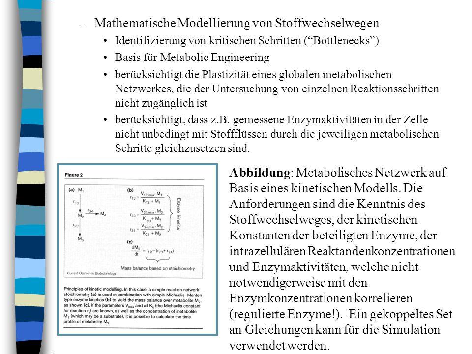 Mathematische Modellierung von Stoffwechselwegen