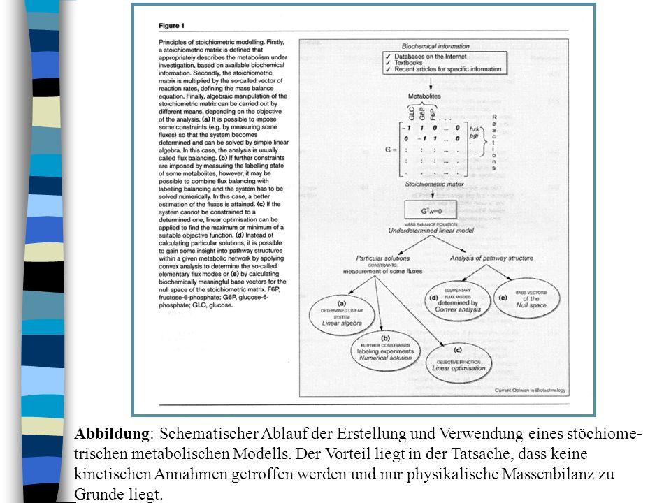 Abbildung: Schematischer Ablauf der Erstellung und Verwendung eines stöchiome-trischen metabolischen Modells.