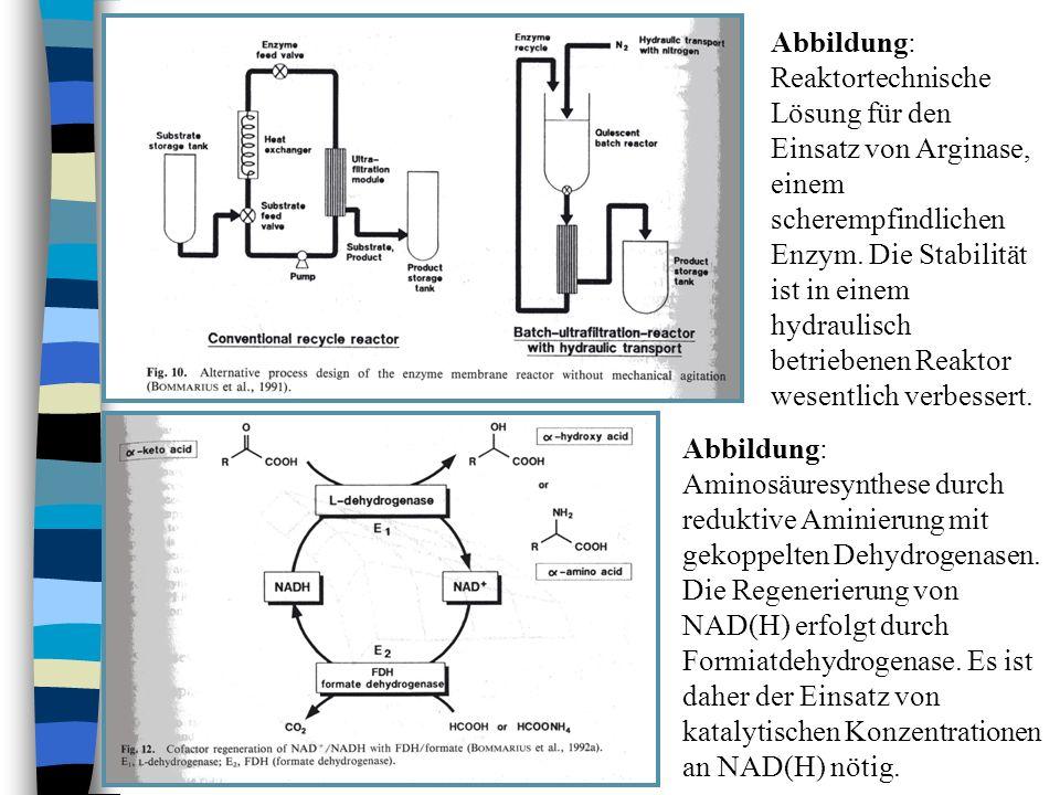 Abbildung: Reaktortechnische Lösung für den Einsatz von Arginase, einem scherempfindlichen Enzym. Die Stabilität ist in einem hydraulisch betriebenen Reaktor wesentlich verbessert.