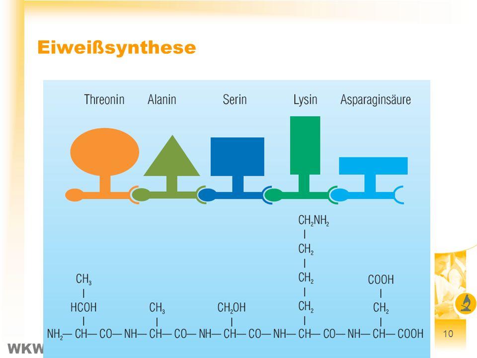Eiweißsynthese 10