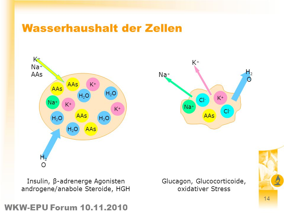 Wasserhaushalt der Zellen