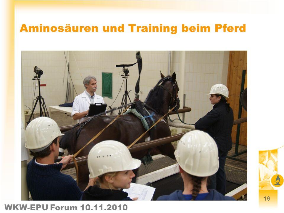 Aminosäuren und Training beim Pferd