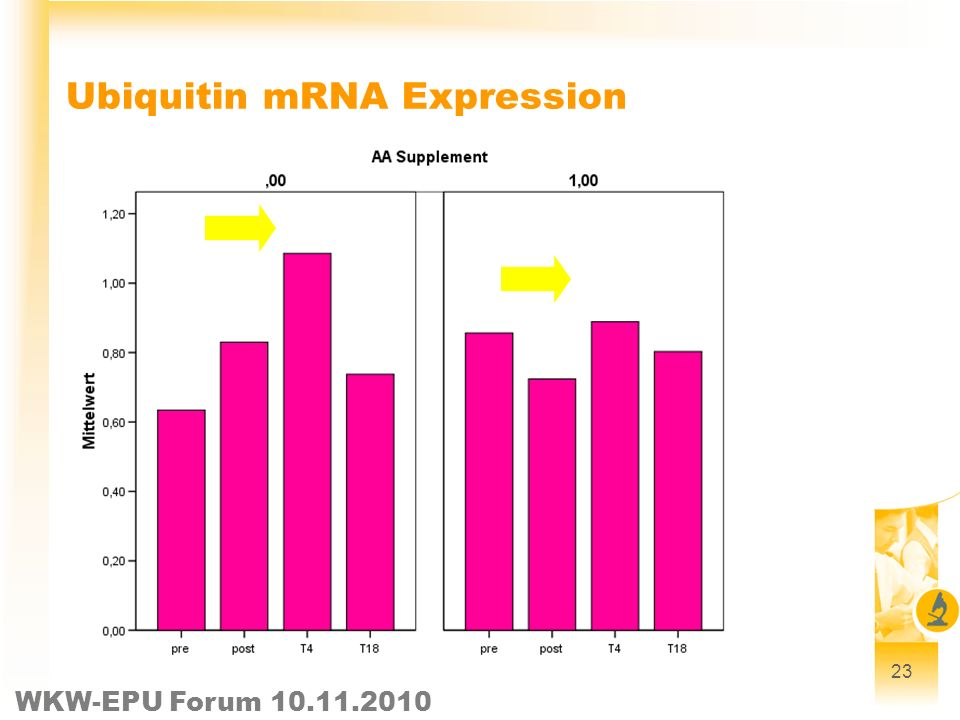Ubiquitin mRNA Expression