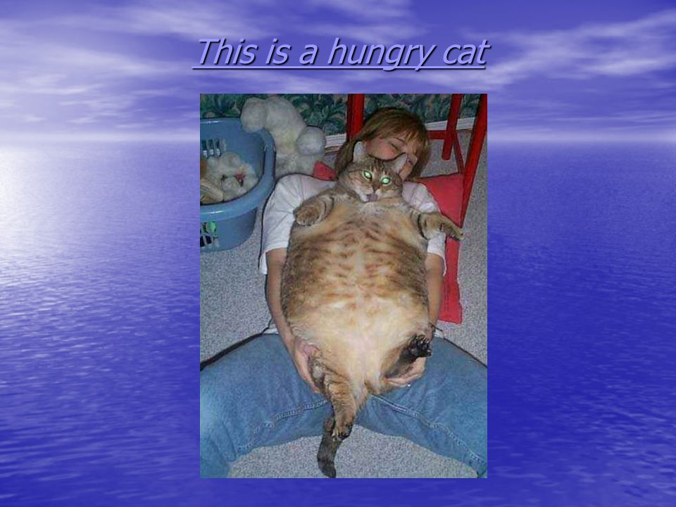 This is a hungry cat