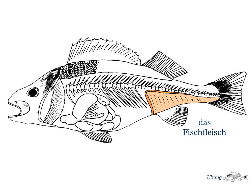 m das Fischfleisch Übung