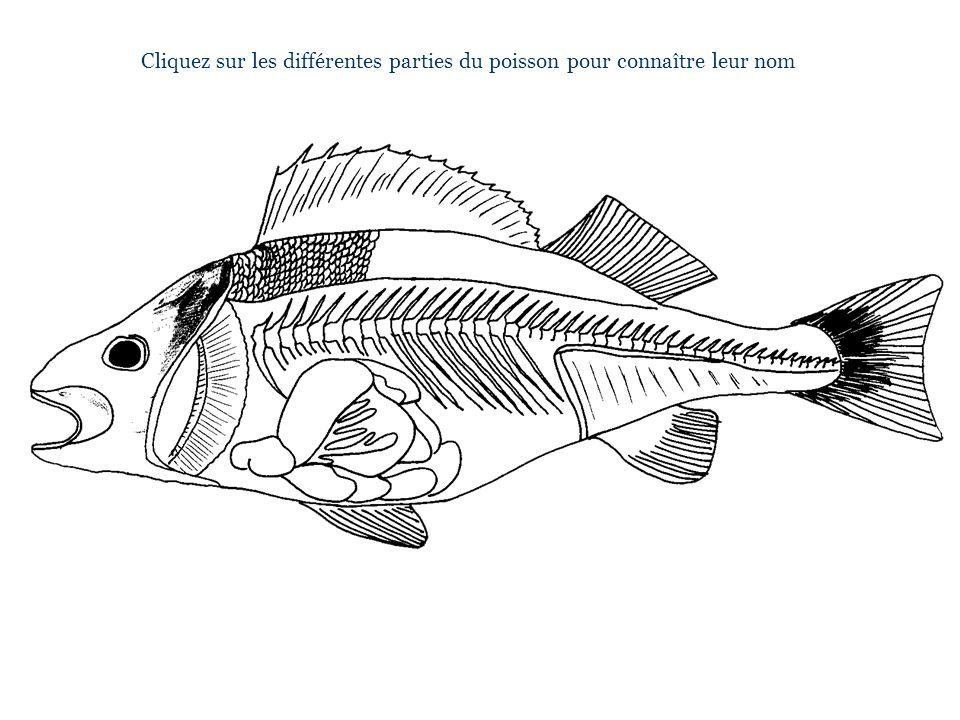 Cliquez sur les différentes parties du poisson pour connaître leur nom
