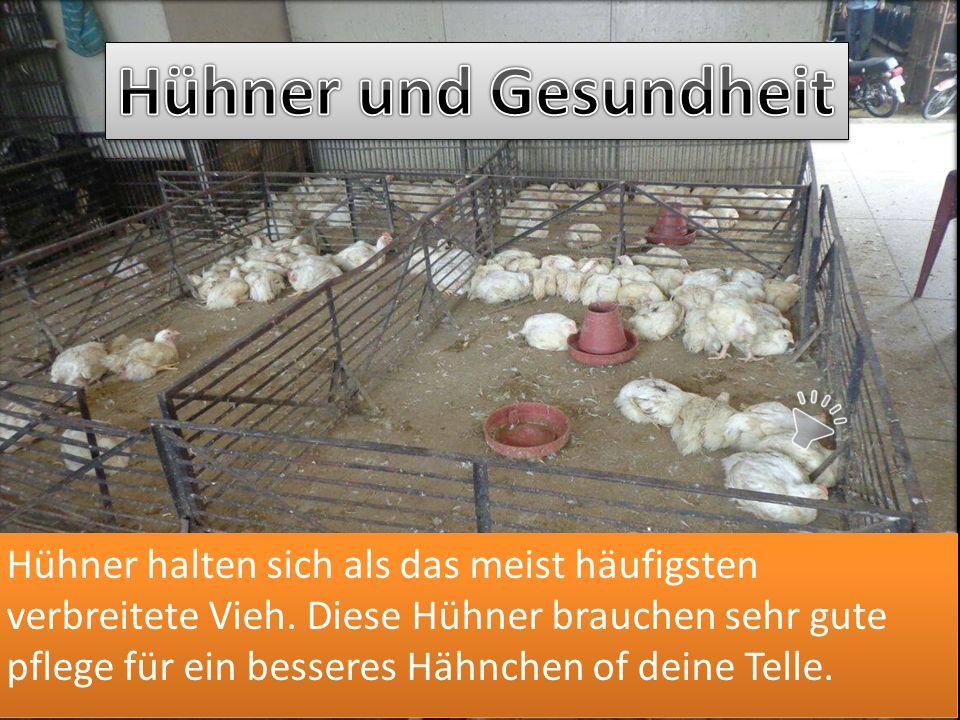 Hühner und Gesundheit
